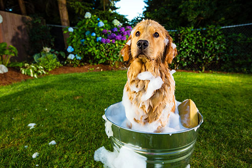 Dog in a bath